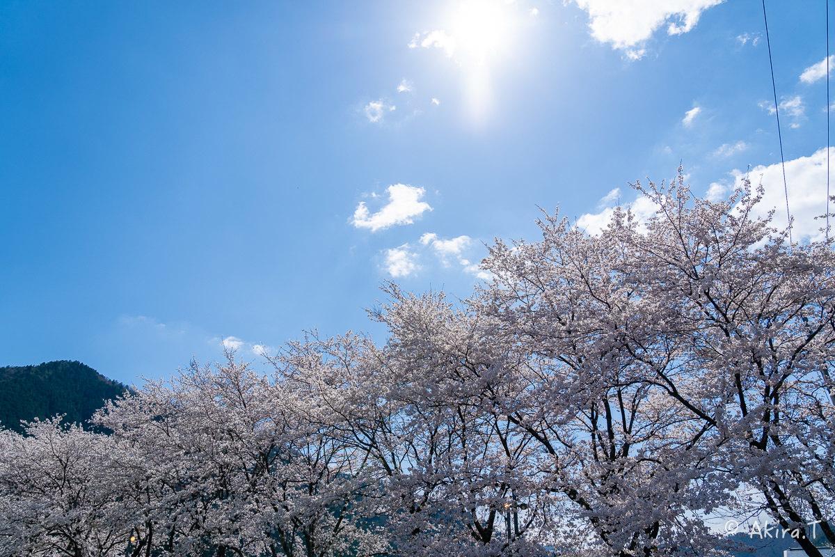 京都の桜 2019 〜8〜_f0152550_23000126.jpg