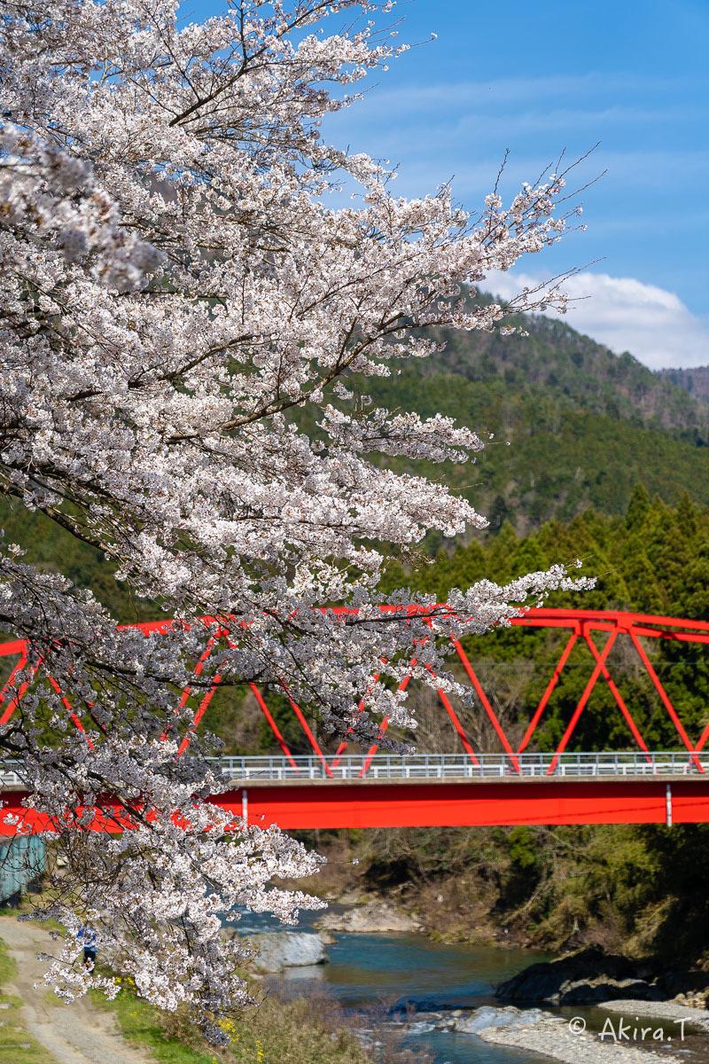 京都の桜 2019 〜8〜_f0152550_23002036.jpg