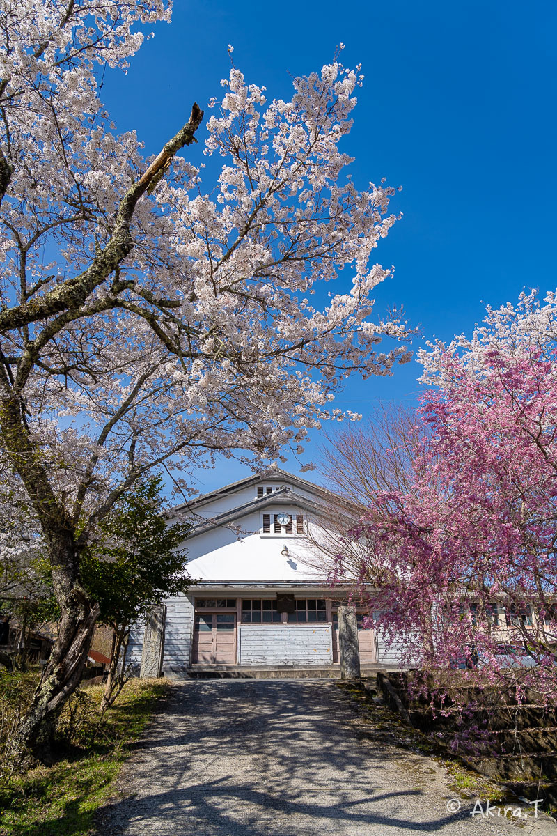 京都の桜 2019 〜8〜_f0152550_23021562.jpg