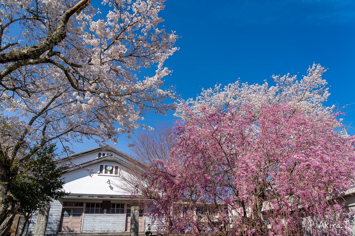 京都の桜 2019 〜8〜_f0152550_23022419.jpg