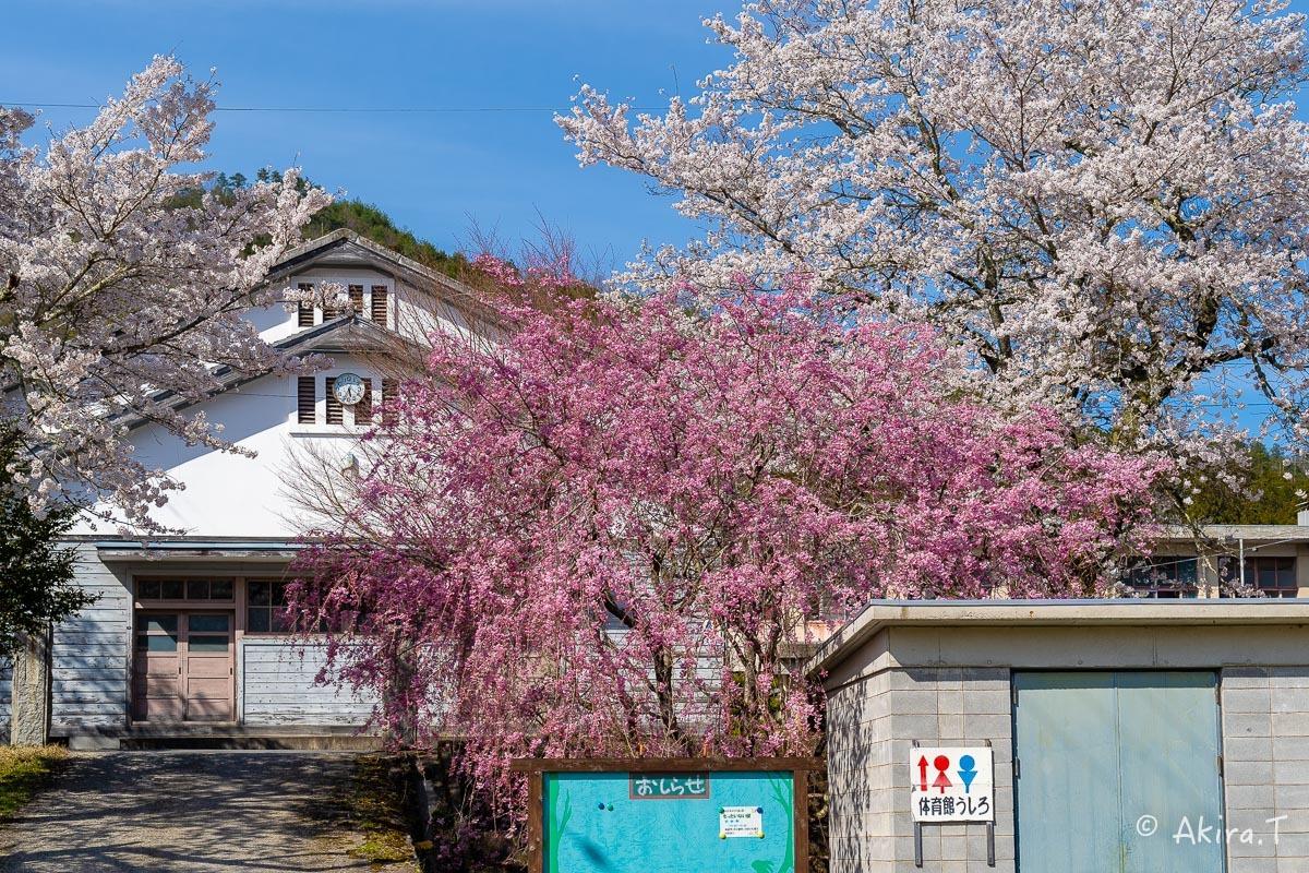 京都の桜 2019 〜8〜_f0152550_23025276.jpg