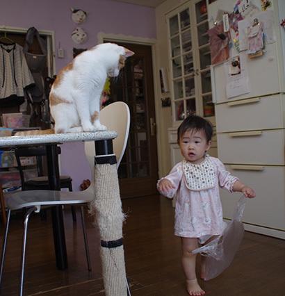 孫と猫_a0028451_19280322.jpg