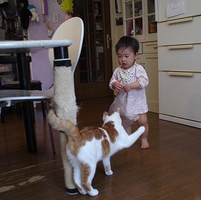 孫と猫_a0028451_19280372.jpg