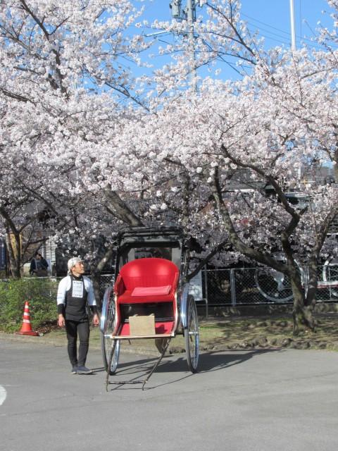 小諸城址・懐古園 * 桜が満開でした~軽井沢の桜も開花しました♪_f0236260_13581110.jpg