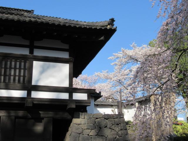 小諸城址・懐古園 * 桜が満開でした~軽井沢の桜も開花しました♪_f0236260_14190789.jpg
