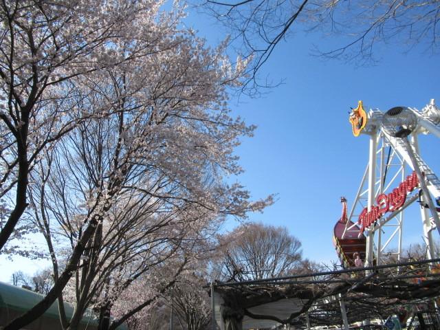 小諸城址・懐古園 * 桜が満開でした~軽井沢の桜も開花しました♪_f0236260_14580462.jpg