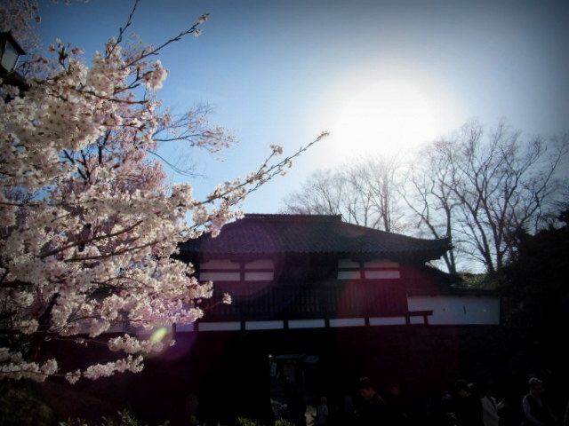 小諸城址・懐古園 * 桜が満開でした~軽井沢の桜も開花しました♪_f0236260_15522801.jpg