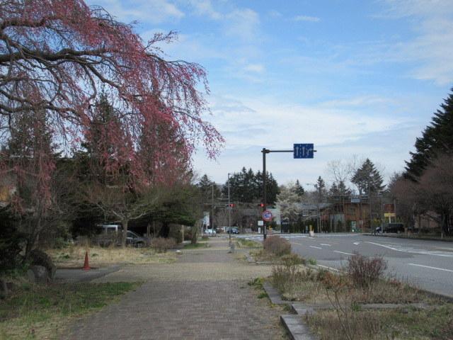 小諸城址・懐古園 * 桜が満開でした~軽井沢の桜も開花しました♪_f0236260_15592929.jpg