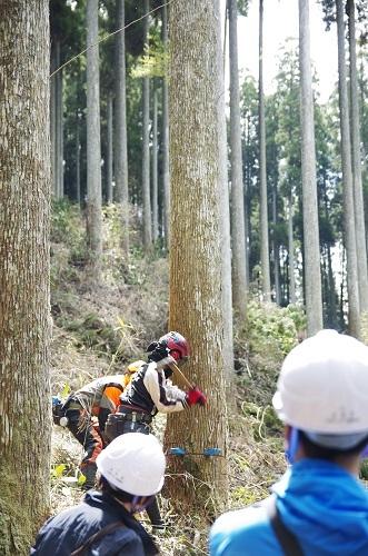 森林ツアーに行ってきました!_b0112371_17440989.jpg