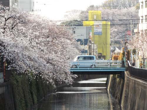 桜見物 近所から池上、目黒川まで見たこと_f0211178_18405385.jpg