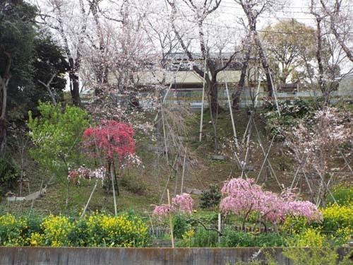 桜見物 近所から池上、目黒川まで見たこと_f0211178_18410273.jpg