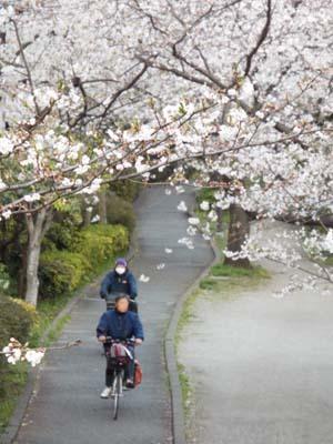 桜見物 近所から池上、目黒川まで見たこと_f0211178_18415648.jpg