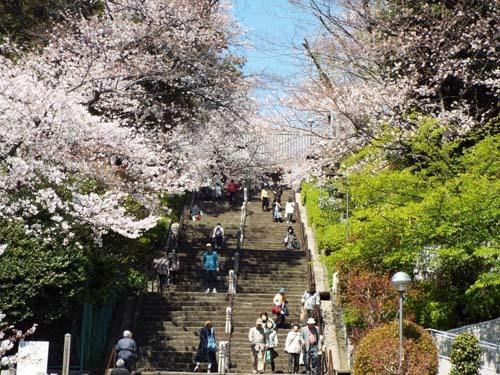 桜見物 近所から池上、目黒川まで見たこと_f0211178_18421833.jpg