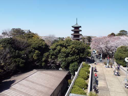 桜見物 近所から池上、目黒川まで見たこと_f0211178_18424162.jpg