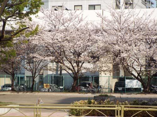 桜見物 近所から池上、目黒川まで見たこと_f0211178_18430175.jpg