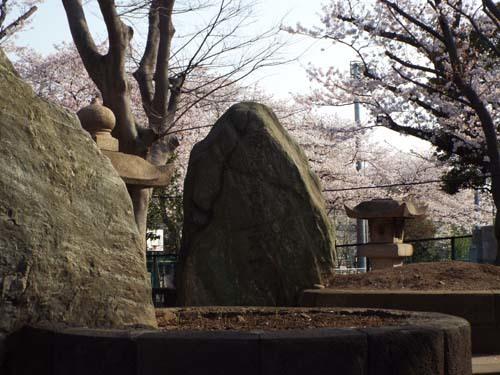 桜見物 近所から池上、目黒川まで見たこと_f0211178_18431211.jpg