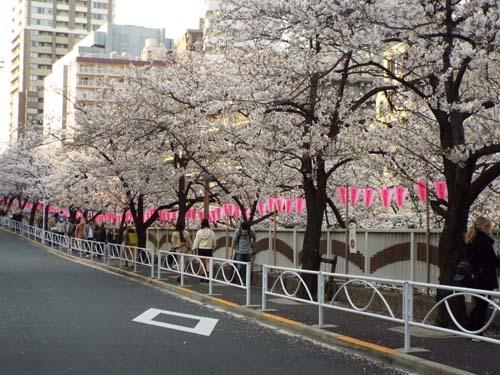 桜見物 近所から池上、目黒川まで見たこと_f0211178_18435326.jpg
