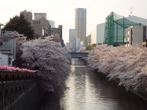 桜見物 近所から池上、目黒川まで見たこと_f0211178_18440459.jpg
