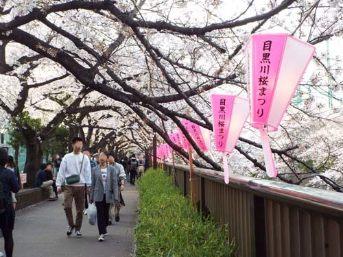 桜見物 近所から池上、目黒川まで見たこと_f0211178_18441682.jpg