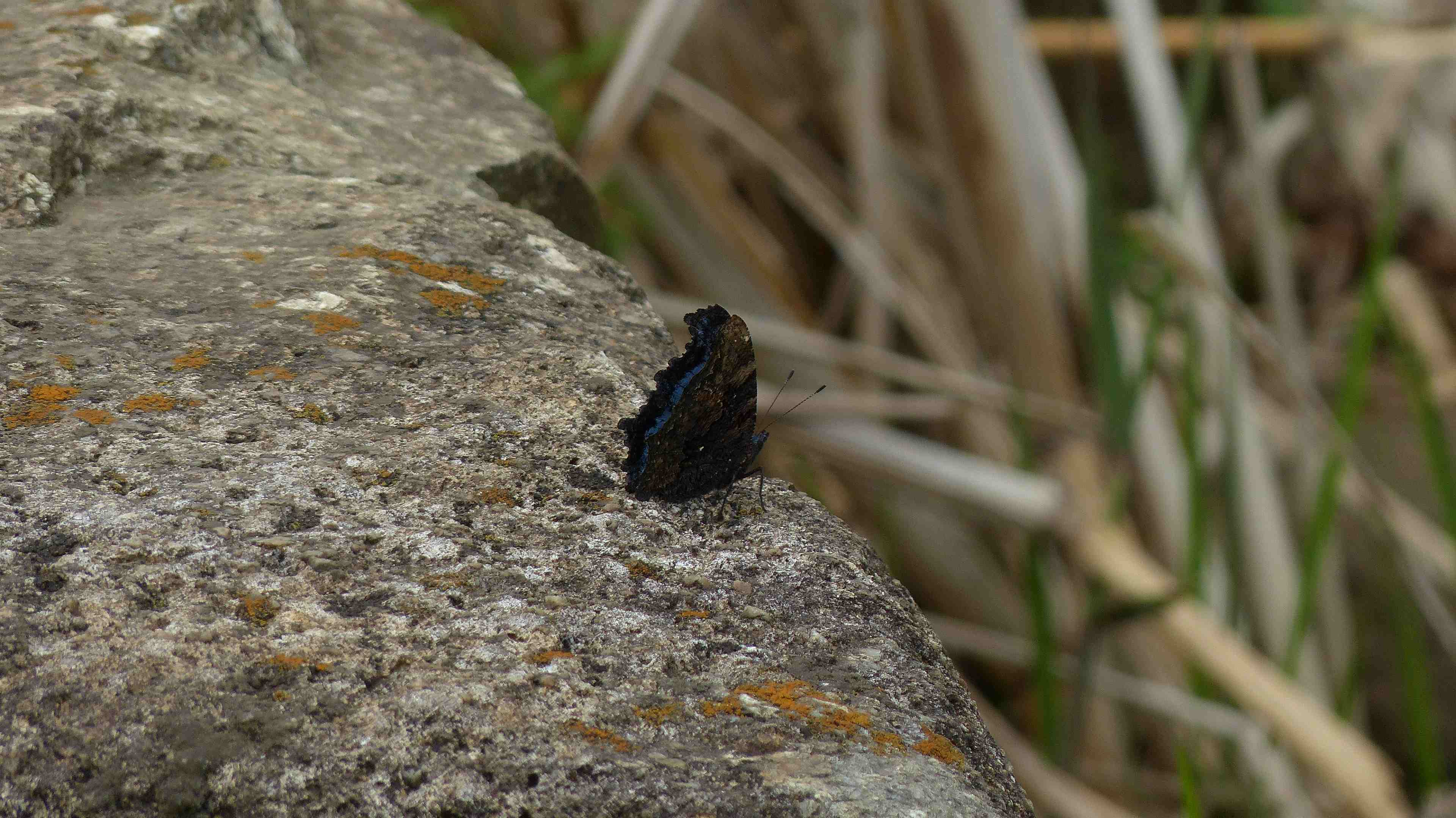 蝶々の季節がやって来た!_a0185081_22463028.jpg