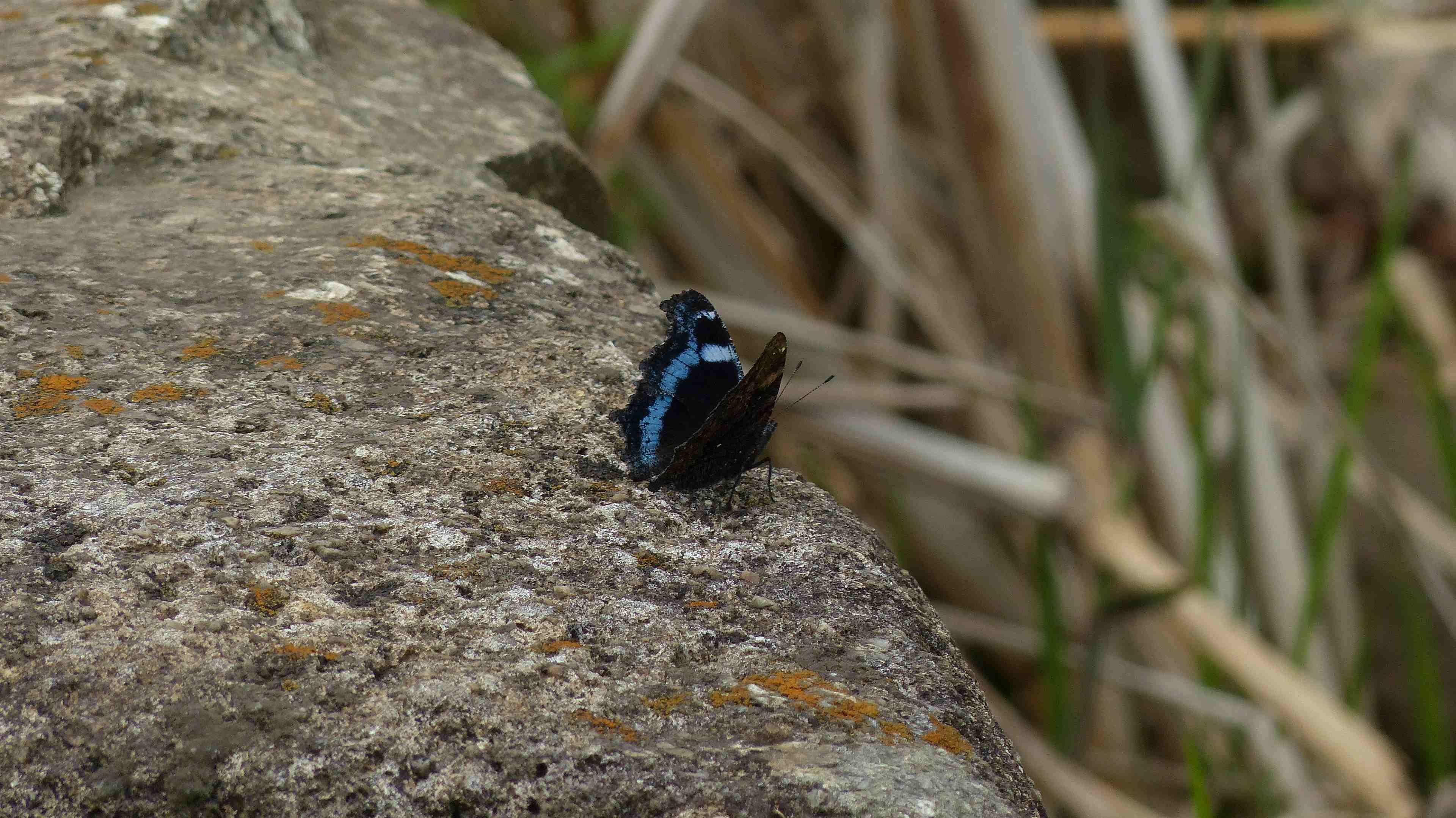 蝶々の季節がやって来た!_a0185081_22472226.jpg