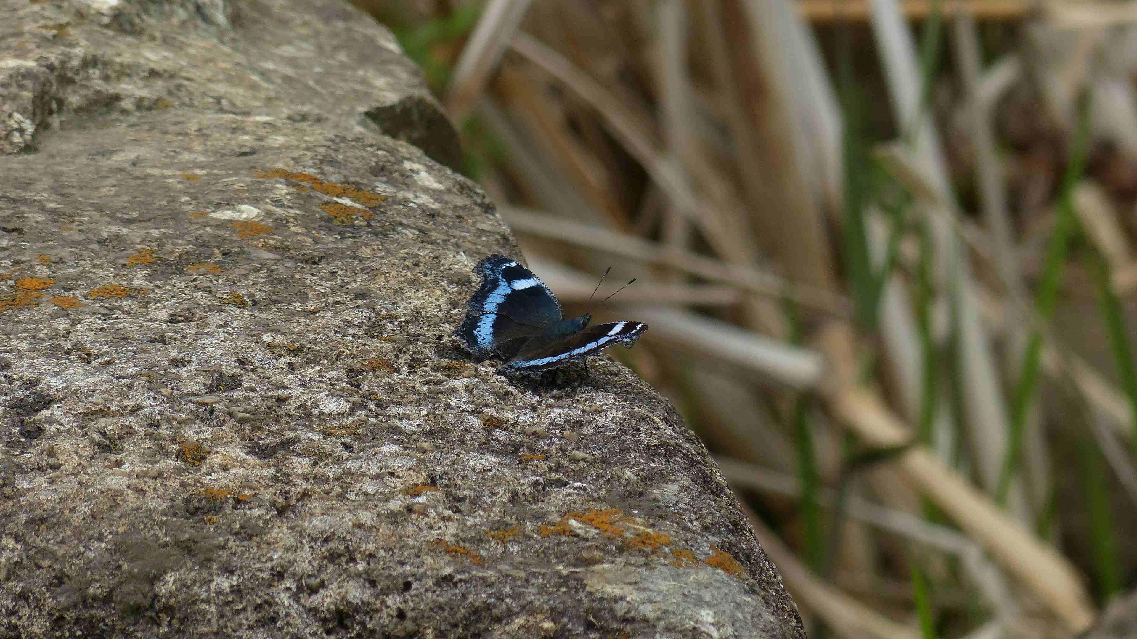 蝶々の季節がやって来た!_a0185081_22473861.jpg