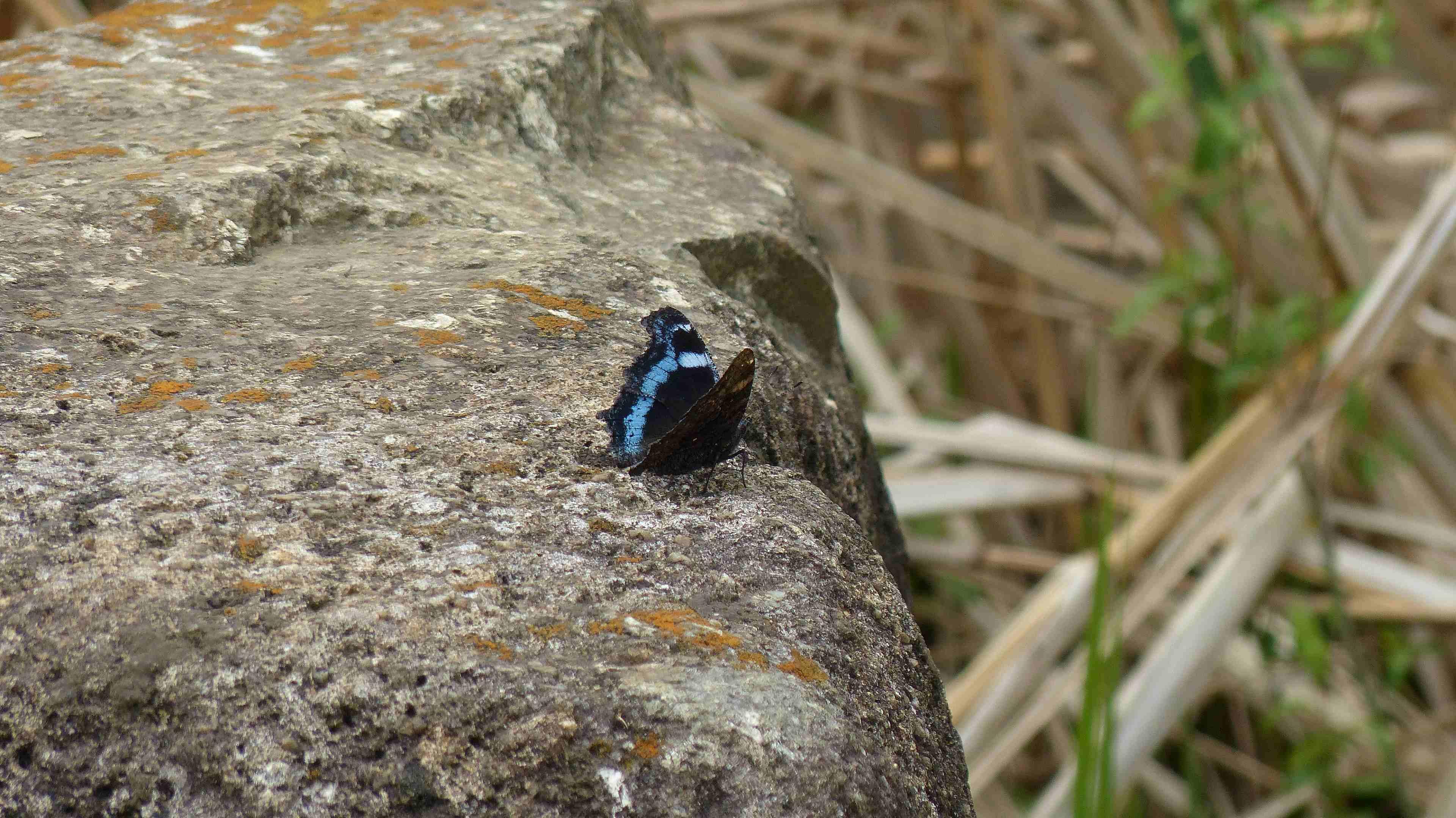 蝶々の季節がやって来た!_a0185081_22481861.jpg
