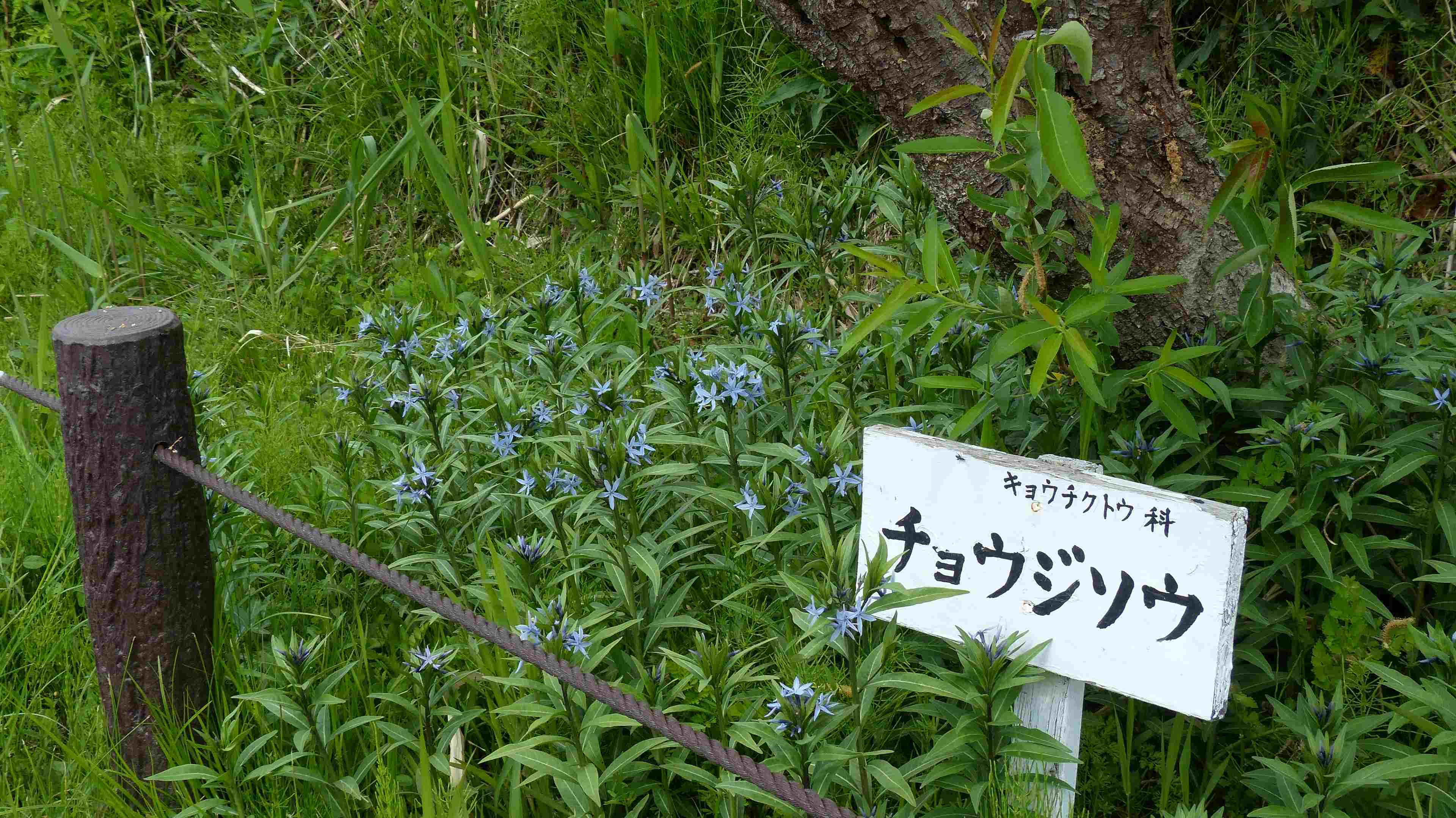 蝶々の季節がやって来た!_a0185081_22503655.jpg