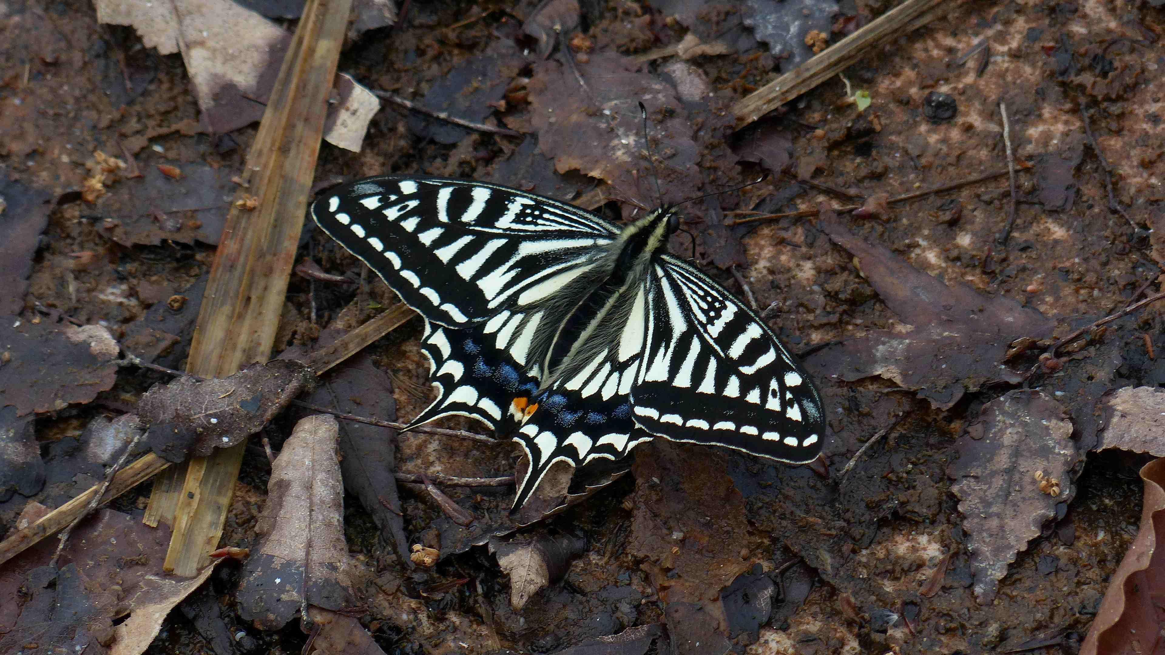 蝶々の季節がやって来た!_a0185081_22511306.jpg