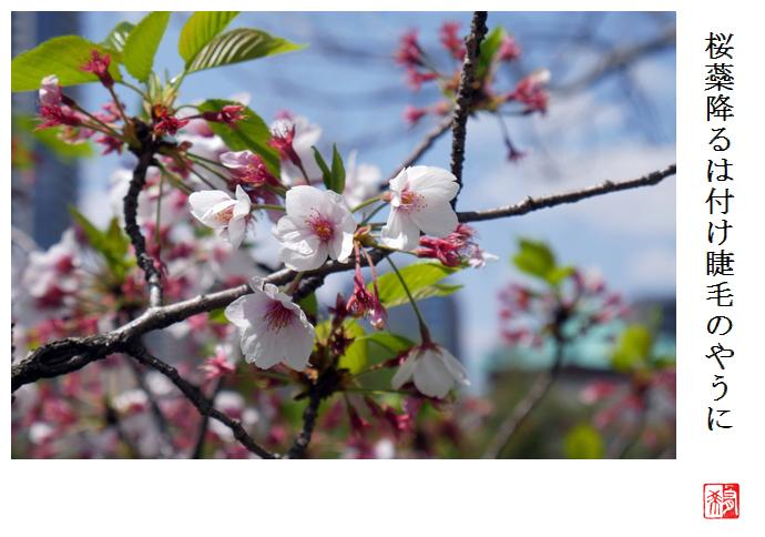 桜蘂降るは付け睫毛のやうに_a0248481_21161344.jpg