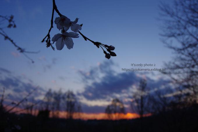 桜sunset_b0391986_20223608.jpg