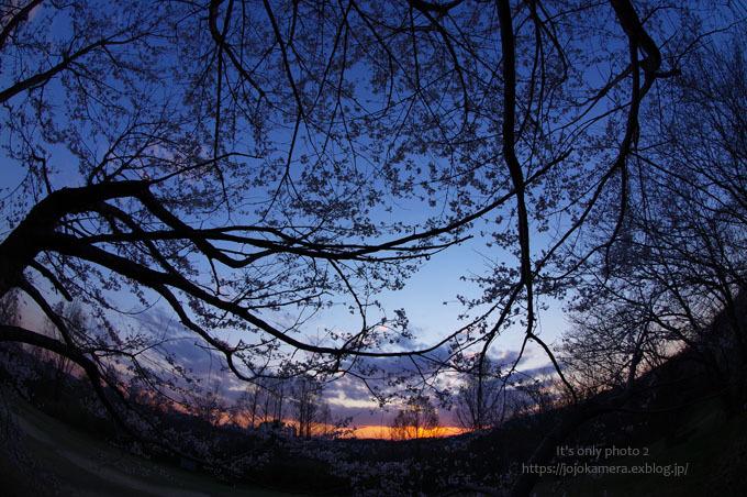 桜sunset_b0391986_20225257.jpg