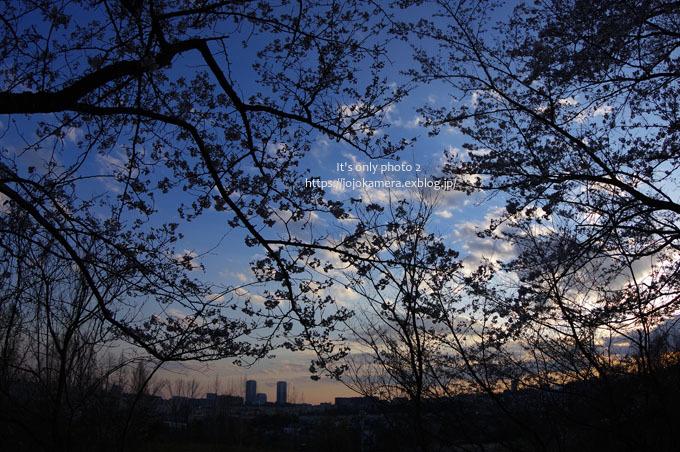 桜sunset_b0391986_20230955.jpg