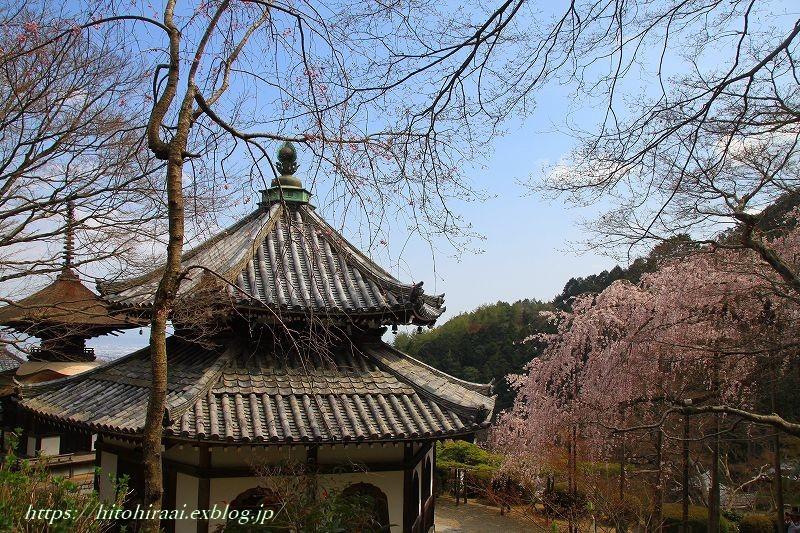京都の桜 善峯寺 _f0374092_16492104.jpg
