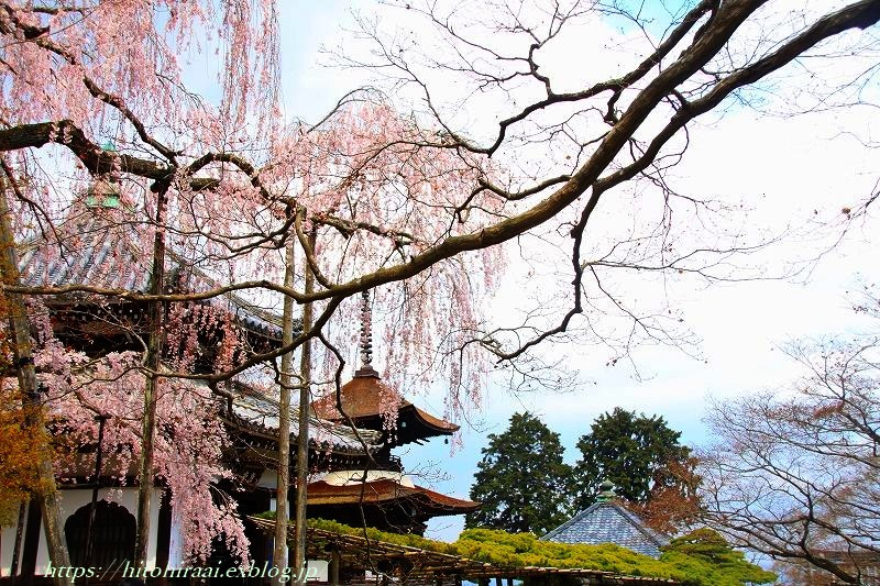 京都の桜 善峯寺 _f0374092_16545828.jpg