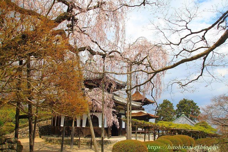 京都の桜 善峯寺 _f0374092_17023307.jpg
