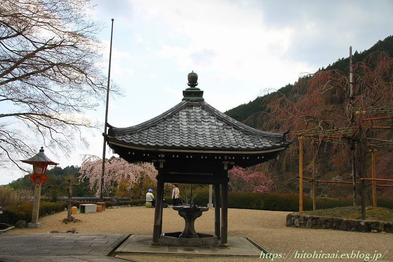 京都の桜 善峯寺 _f0374092_17123427.jpg