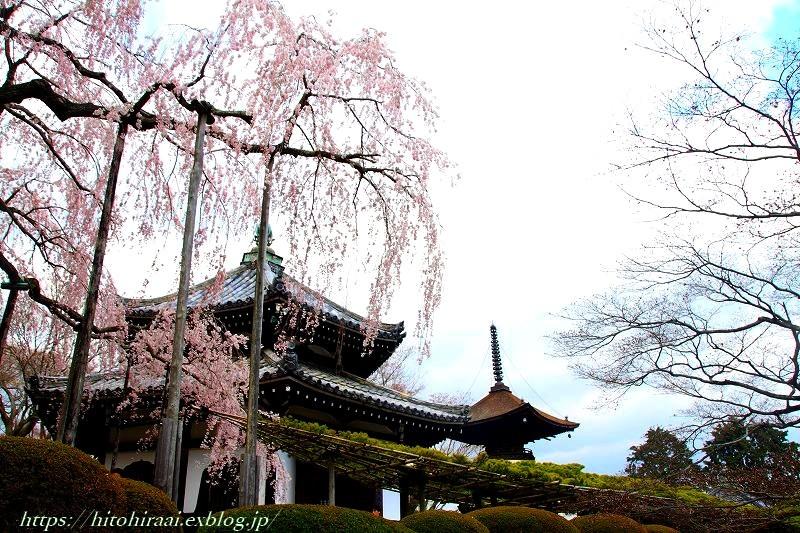京都の桜 善峯寺 _f0374092_17314378.jpg