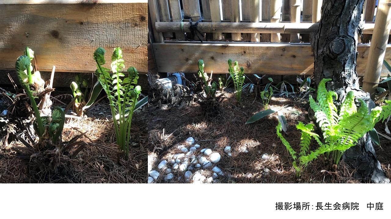 春到来_b0159098_10453902.jpg
