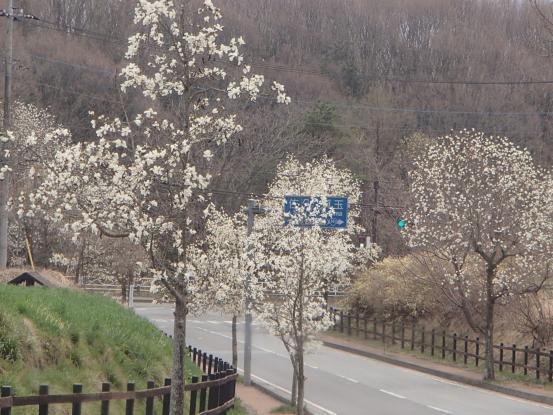 朝散歩コースの花たちの今_f0064906_16430609.jpg