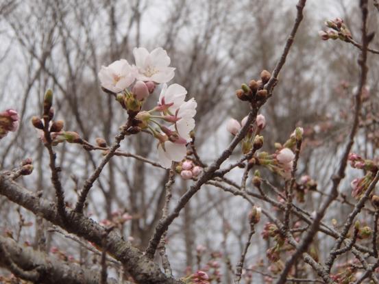 朝散歩コースの花たちの今_f0064906_16431664.jpg