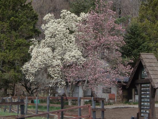 朝散歩コースの花たちの今_f0064906_16432393.jpg