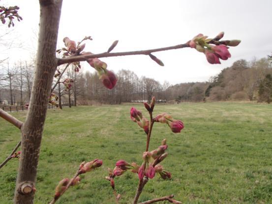 朝散歩コースの花たちの今_f0064906_16433020.jpg