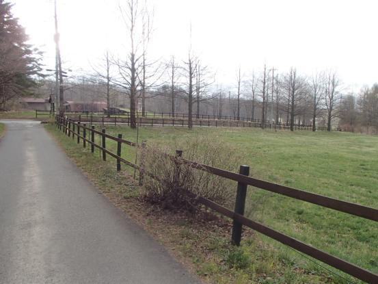 朝散歩コースの花たちの今_f0064906_16433394.jpg