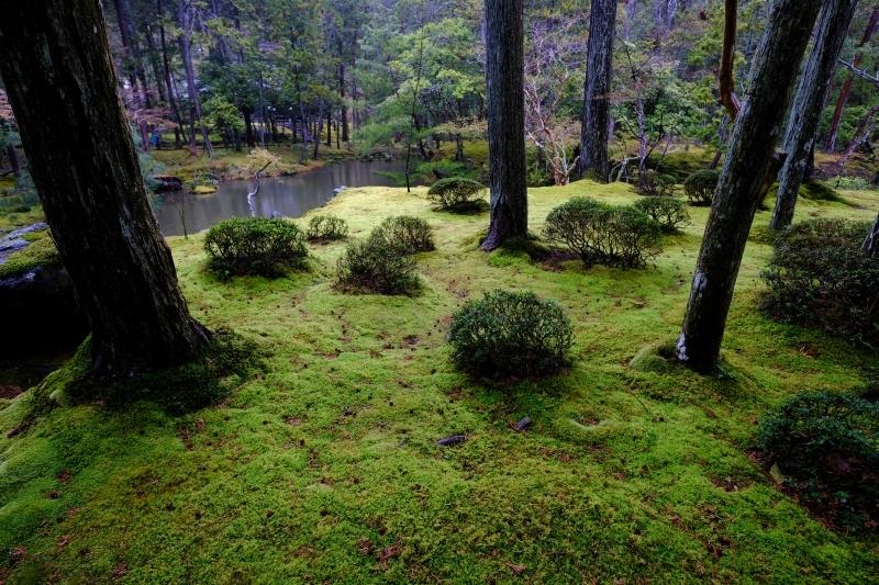 京都の旅 \'19 その2_e0000910_10014192.jpg