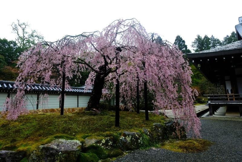 京都の旅 \'19 その2_e0000910_10140440.jpg