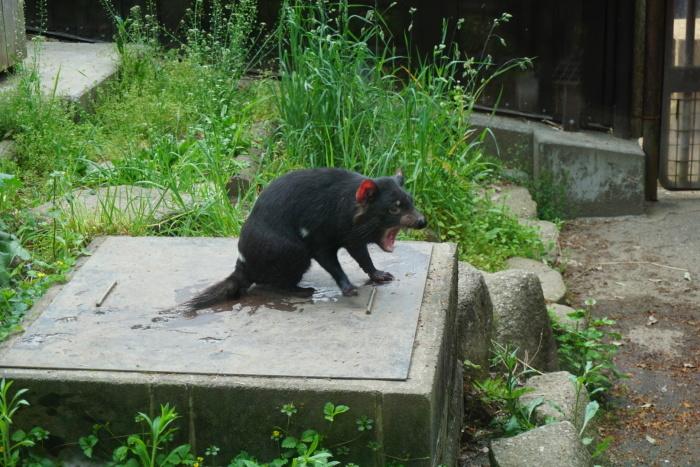 多摩動物公園_c0071924_16534148.jpeg