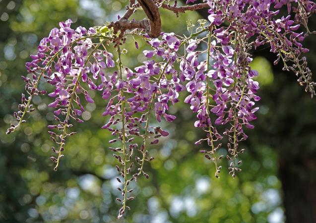 花への来客_c0104227_16551589.jpg