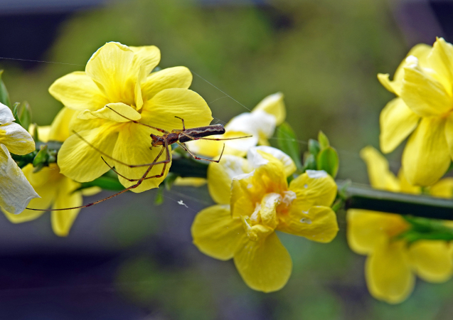 花への来客_c0104227_17545378.jpg