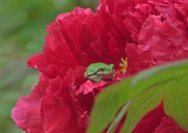 花への来客_c0104227_17550088.jpg